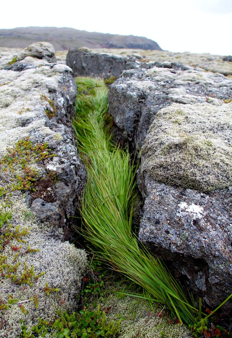 River of Grass - Landscapes in Iceland can have few trees and some fields can be dominated by moss and lava rock and hardly any grass where other field are only grass. I swapped materials by creating a river of grass in a grassless landscape.