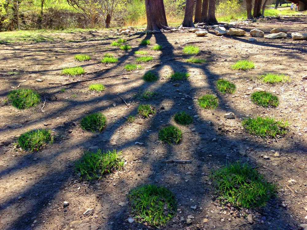 Connect the Dots: A variety of native central Texas grass and wildflowers seeds were planted in a sea of vegetated circles on an overused eroded piece of land. These circles of grass will grow together as the plants spreads and reseeds controlling erosion and increasing diversity.